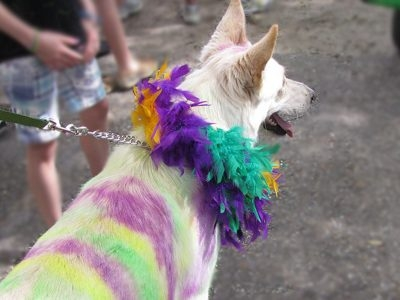 CAAWS Mystic Crewe of Mutts Parade: Paws Around the World