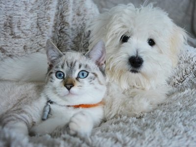 Dog and Cat Adoptions