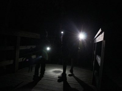 Swamp Flashlight Night