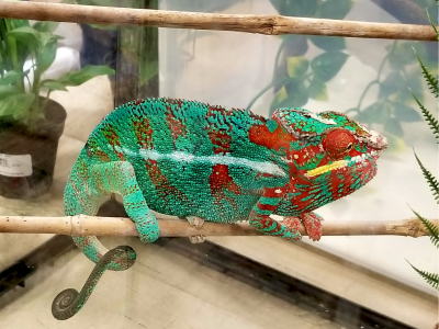 Repticon Baton Rouge: The Hills Are Alive with Wild Critters!