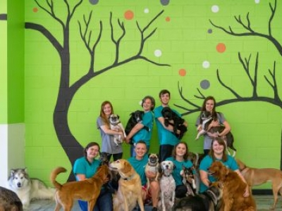 Spring Break for Your Pet: PetSuites Baton Rouge