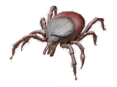 4 Steps to Protect Yourself from Ticks